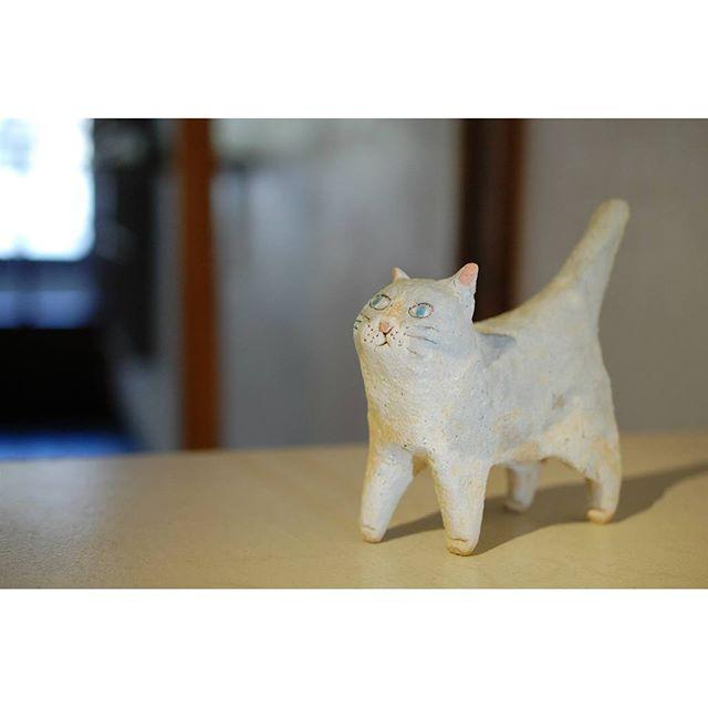 地元信楽で作陶されている前川幸市さんの陶の猫。 いつも幸せな気持ちを届けてくれる可愛い動物たちと一緒に皆さまのご来店を心よりお待ちしています。