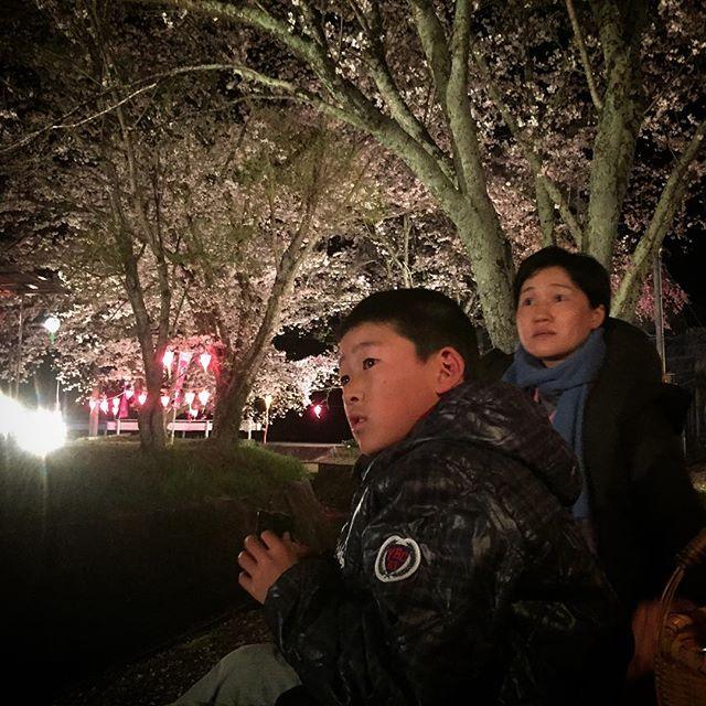 Cherry-blossom viewing! お花見日和の日曜日の夜、こんなにきれいにライトアップされてるのに、川端家の貸切とかいう贅沢。いいとこだなー。